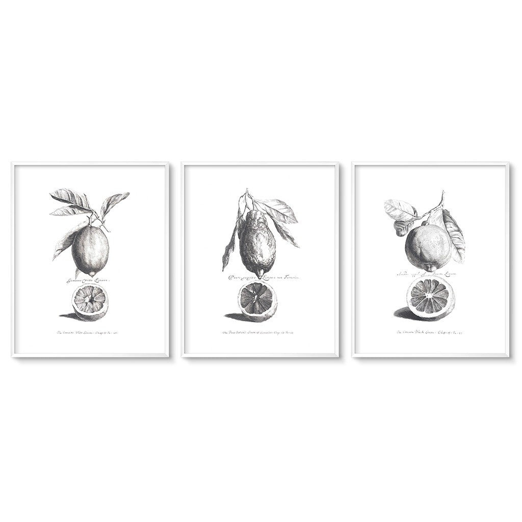 vintage botanical art triptych limes