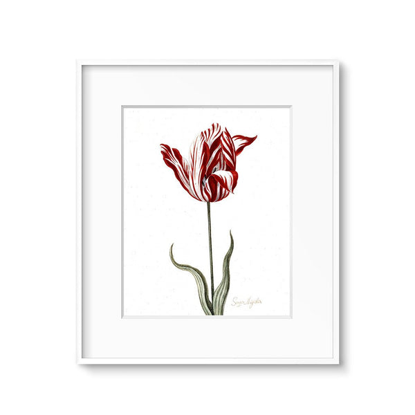 vintage botanical illustration tulip flower art