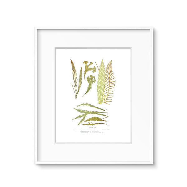 fern leaves vintage botanical illustration art print