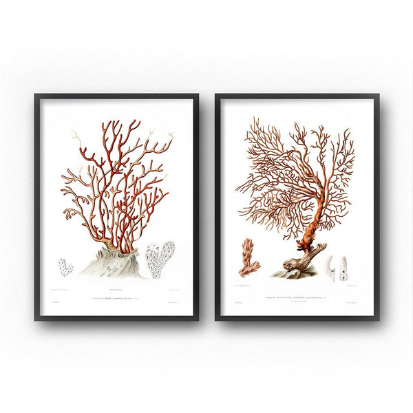 vintage sea coral illustrations wall art set diptych