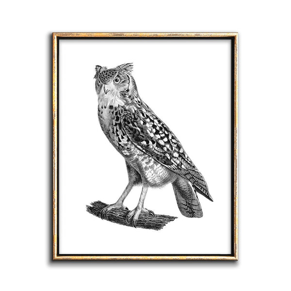 vintage-owl-illustration-print
