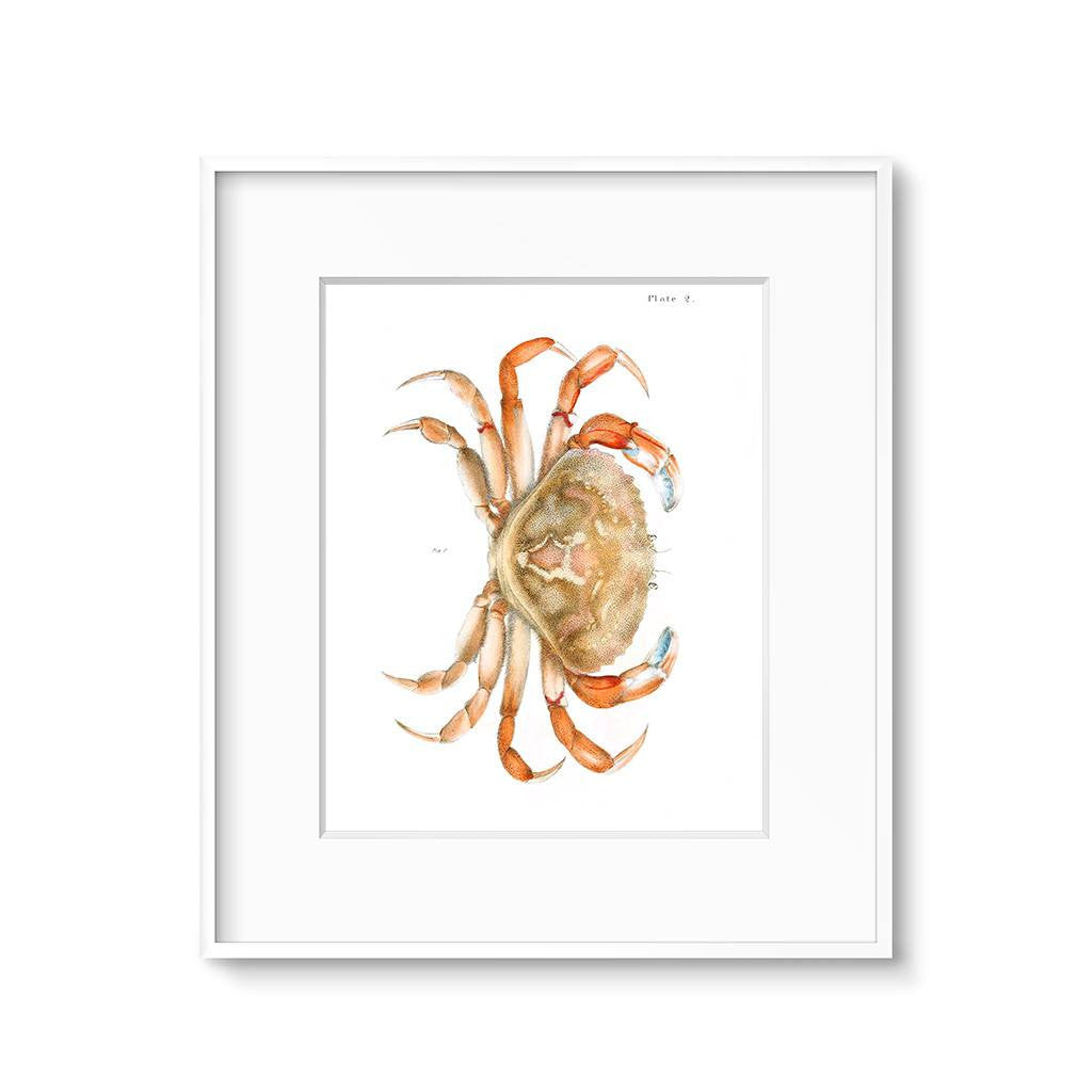 vintage crab illustration kitchen wall art print