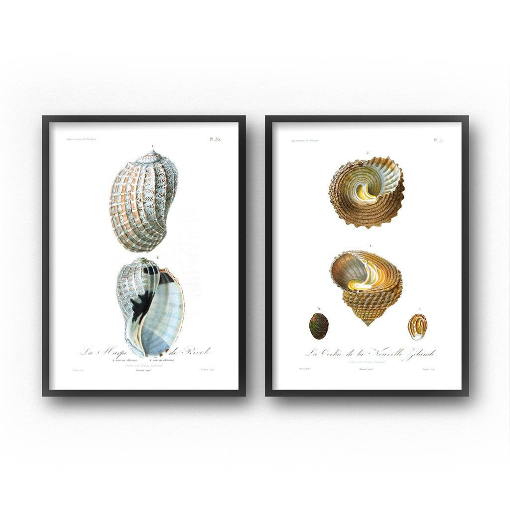 seashell art print set coastal decor
