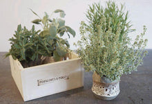 A selection of herbs set in either 4 or 6 pots in a locally handmade wooden box.