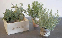 AA selection of herbs set in either 4 or 6 pots in a locally handmade wooden box.