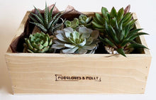 A selection of succulents set in either 4 or 6 pots in a locally handmade wooden box.