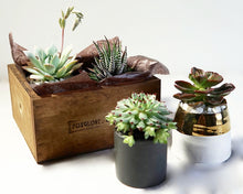 The Succulents