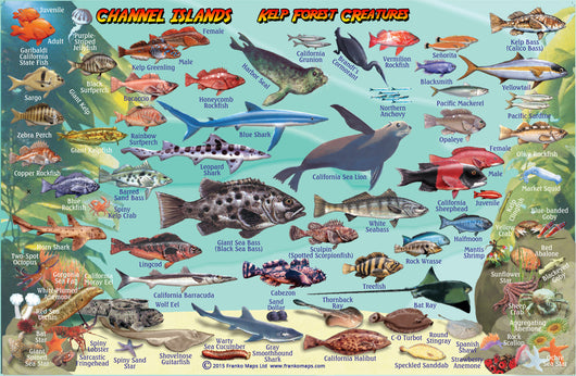 Channel Islands National Park Fish Card – Franko Maps on