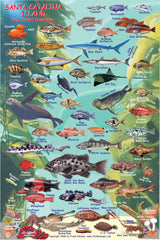 Two Harbors Catalina Fish Card