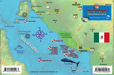 Central Sea of Cortez Dive Guide & Fish ID
