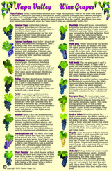 Napa Valley Wine Grapes Guide Card