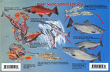 Puget Sound Salmon Lifecycle