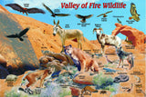 Valley of Fire Wildlife Card