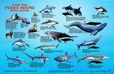 Puget Sound Marine Animals Card