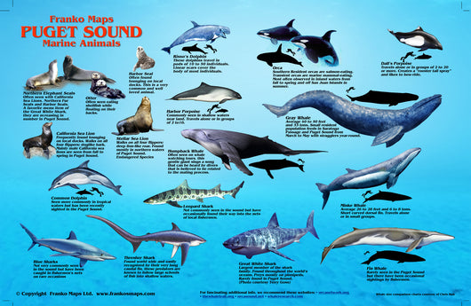 Puget Sound Marine Animals