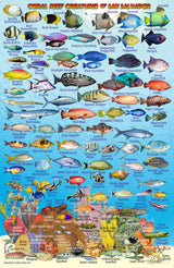 San Salvador Island, The Bahamas, Fish Card