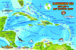 Caribbean Sea Fish Card