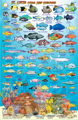 St Lucia Fish Card