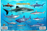 Caribbean Sharks and Rays card