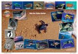 Sea Turtles Lifecycle Poster
