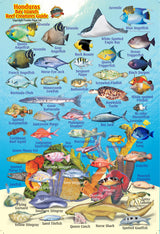 Honduras Bay Islands Mini Fish Card