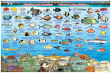 Franko Maps Bora Bora Fish ID Card