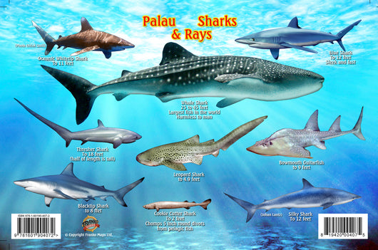 Palau Sharks & Rays Card
