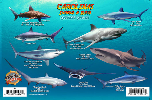 Sharks & Rays of the Carolinas Card