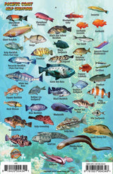Pacific Coast Ocean & Kelp Creatures Fish Card