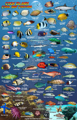 Cook Islands Fish Card