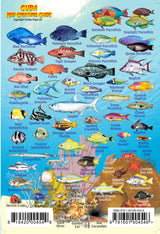 Cuba Reef Creatures Mini Card