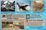 Florida Alligators Guide Card