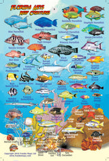 Florida Keys Mini Fish Card