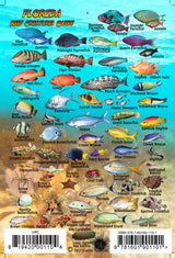 Florida Reef Creatures Mini Card