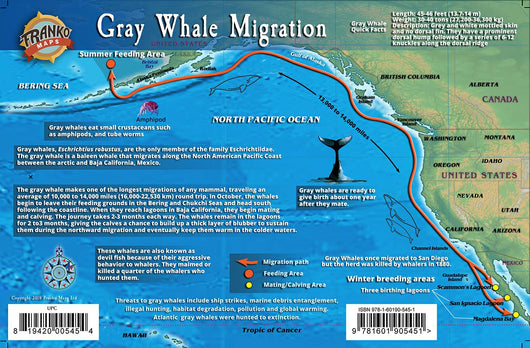 Gray Whale Migrations Guide Card