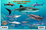 Gulf of Mexico Sharks & Rays Card