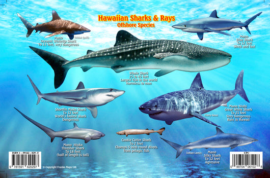 Hawaiian Sharks & Rays Card