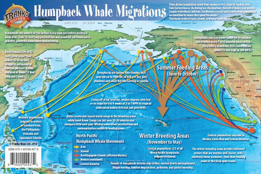 Pacific Humpback Whale Migration
