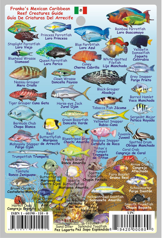 Mexican Caribbean Fish Card
