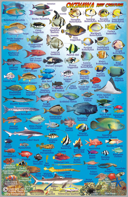 Okinawa Dive Guide & Fish ID