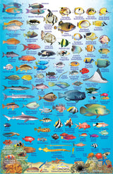 Philippines Fish Card