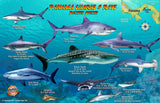 Panama Sharks & Rays Card