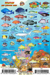 Roatan Mini Fish Card