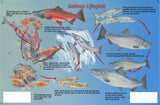 Pacific Northwest Salmon Lifecycle Card