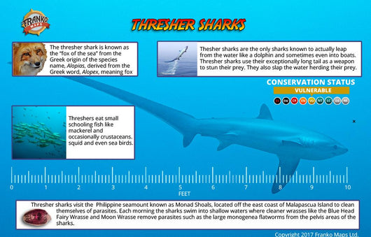 Philippines Thresher Sharks, Monad Shoal Card
