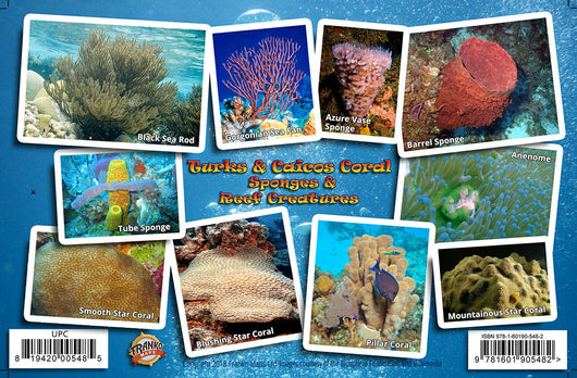 Turks & Caicos Coral Guide Card
