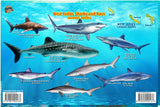 West Indies Sharks & Rays