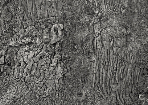 Black and White composite photograph of oak tree bark forming many images for interpretation