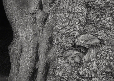 Black and White composite photograph of oak tree bark forming images for interpretation. Here mainly two sleeping heads and hugging bodies