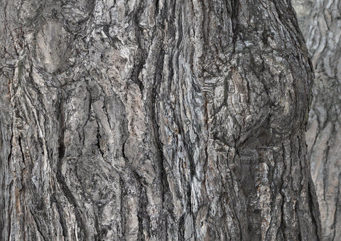 Composite photograph of pine tree bark forming images- here human forms
